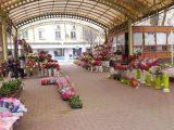Цветарите в Шумен са заплашени от фалит заради огромните общински наеми в кризата